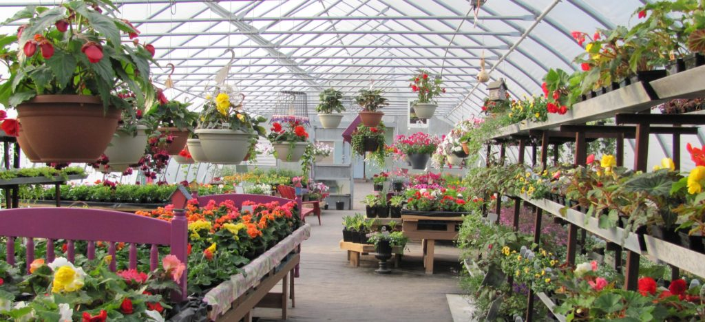 A view of the inside of one of RIsse's Greenhouses, filled with vibrantly colored flower varieties.