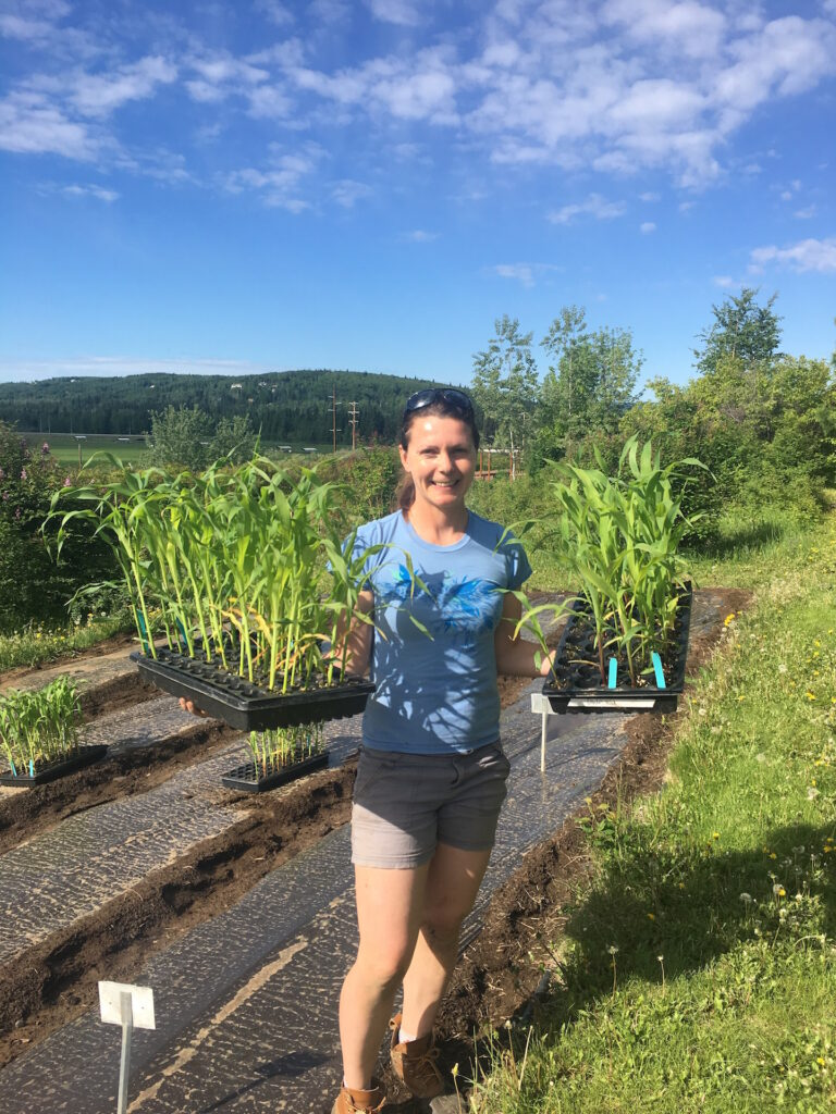 Heidi Rader hold two flats of corn seedlings and prepares to plant seedlings in a prepared garden bed with bright blue sky in the background.
