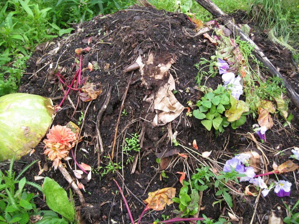 A compost pile that has recently been turned and shows both nearly-composed material as well as new kitchen scraps.