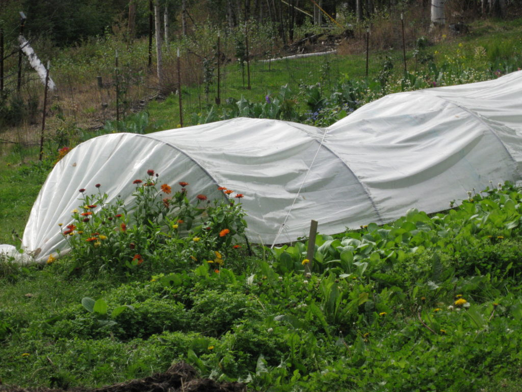 A garden in Alaska using frost cloth to create a low tunnel to help insulate plants from cool temperatures.