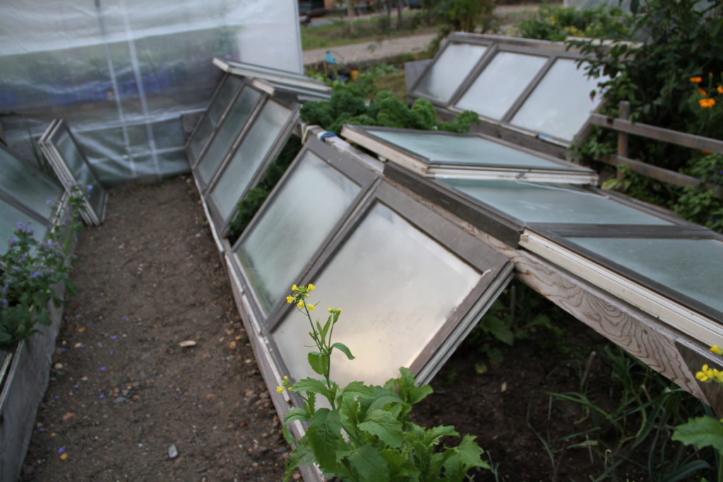 Old windows can be used to create a structure called a cold frame. Here, a cold frame is erected over a raised garden bed.