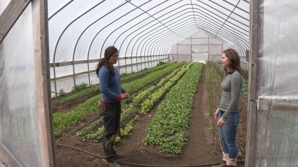 Heidi Rader and Emily Garrity Stand talking in Emily's Hightunnel containing early season greens.
