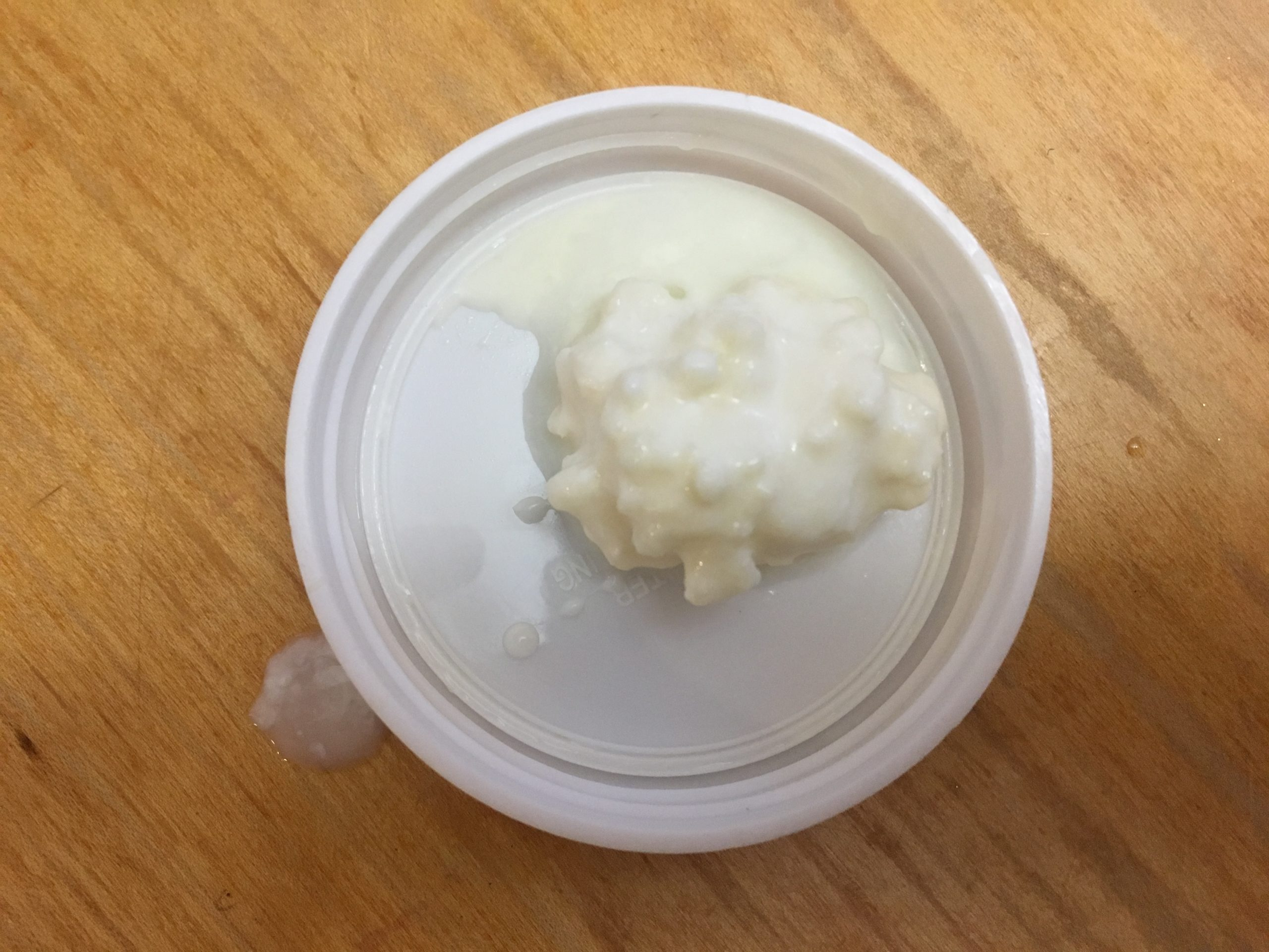 Colony of fresh kefir up close.