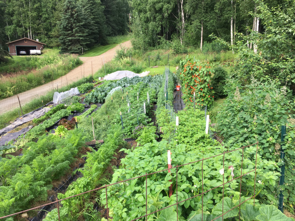 Pictures Terry Reichardts' terraced garden with many kinds of vegetables growing, including, potatoes, kale and zucchini.