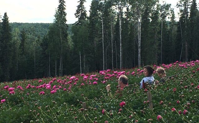 Three people in a peony field with blooming peonies sitting and relaxing with backs turned.