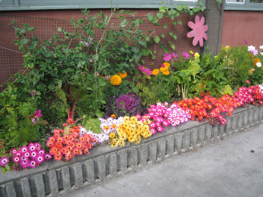 A very colorful garden bed that integrates flowers and vegetables like kale, swiss chard and peas.