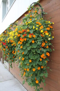 orange and yellow baskets filled with black-eyed susan flowers trailing down