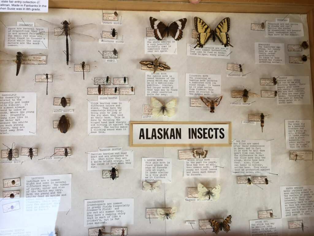 An collection of Alaskan insects mounted to a board with species information.