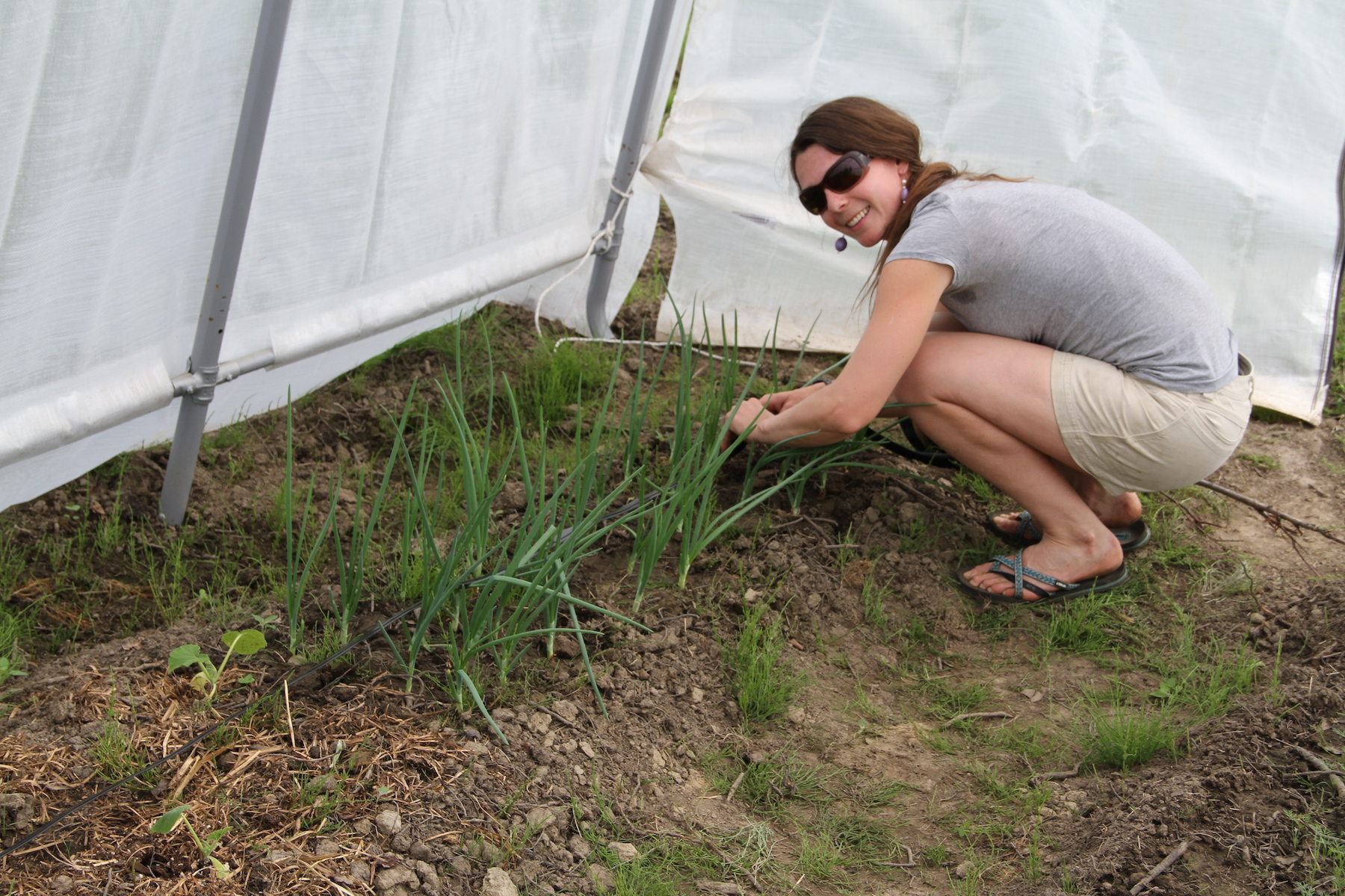 Heidi Rader in a grey shirt setting up a drip-irrigation system in her hoop house.