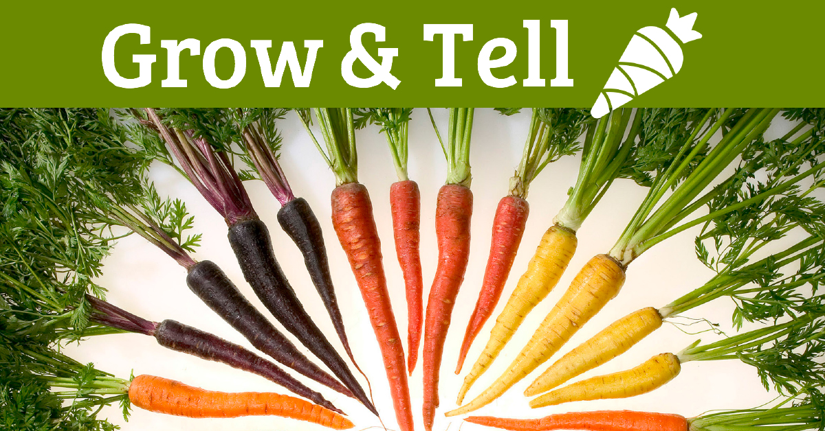 colorful carrots with grow and tell logo